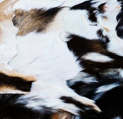 Cow Hides